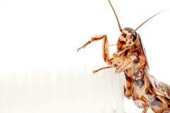 De kakkerlakken zijn in de tandenborstel op witte achtergrond stock afbeeldingen