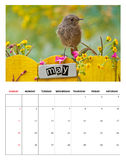 De kalender van mei 2014 Stock Afbeeldingen