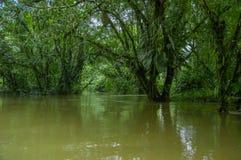 De kalme en magische donkere die wateren van Amazonië, in het regenwoud van Amazonië in het Nationale Park van Cuyabeno, in Sucum Royalty-vrije Stock Foto's