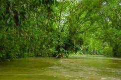 De kalme en magische donkere die wateren van Amazonië, in het regenwoud van Amazonië in het Nationale Park van Cuyabeno, in Sucum Royalty-vrije Stock Fotografie