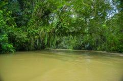 De kalme en magische donkere die wateren van Amazonië, in het regenwoud van Amazonië in het Nationale Park van Cuyabeno, in Sucum Stock Foto's