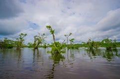 De kalme en magische donkere die wateren van Amazonië, in het regenwoud van Amazonië in het Nationale Park van Cuyabeno, in Sucum Stock Afbeelding