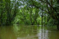 De kalme en magische donkere die wateren van Amazonië, in het regenwoud van Amazonië in het Nationale Park van Cuyabeno, in Sucum Stock Foto