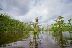 De kalme en magische donkere die wateren van Amazonië, in het regenwoud van Amazonië in het Nationale Park van Cuyabeno, in Sucum Stock Afbeeldingen