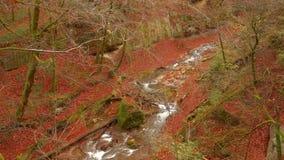 De kalme rivier stroomt in een mooi de herfstbos stock videobeelden