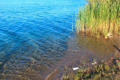 De kalme rushy kust van het de zomermeer Royalty-vrije Stock Fotografie