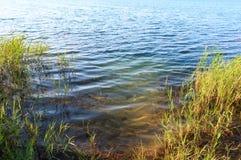 De kalme rushy kust van het de zomermeer Royalty-vrije Stock Afbeeldingen