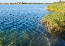 De kalme rushy kust van het de zomermeer Stock Afbeeldingen