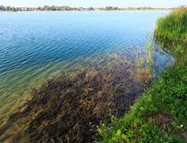 De kalme rushy kust van het de zomermeer Royalty-vrije Stock Foto