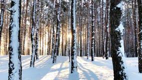 De kalme scène van de de winteraard van boslandschap in zonsondergang stock footage