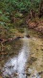 De kalme sectie van kleine rivierstroom met daling kleurde bladeren die omhoog op banken worden opgestapeld royalty-vrije stock afbeelding