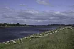 De Kalmte van de rivier stock afbeelding