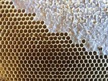 De kam van de bijenhoning royalty-vrije stock afbeelding