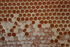 De Kam van de bijenbijenkorf Stock Foto