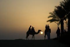 De kameel en de ruitersilhouet van de woestijn Royalty-vrije Stock Foto