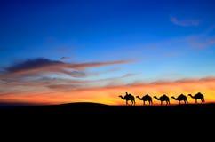 De kameel van de caravan stock afbeeldingen