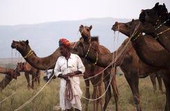 De kameelhandelaar met zijn kamelen Stock Foto's