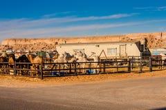 De kameelmarkt dichtbij Riyadh, Saudi-Arabië royalty-vrije stock afbeelding