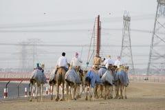 De Kamelen van Doubai de V.A.E en jockeys opleiding bij Nad Al Sheba Camel Racetrack bij zonsondergang stock foto's