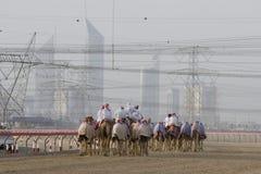 De Kamelen van Doubai de V.A.E en jockeys opleiding bij Nad Al Sheba Camel Racetrack bij zonsondergang stock afbeelding