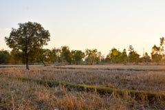 De kamillegebied van het de zomerlandschap Stock Foto
