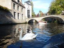 De kanalen van Brugge Royalty-vrije Stock Afbeeldingen