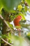 De kanarie zit op een tak in het tropische bos royalty-vrije stock foto's