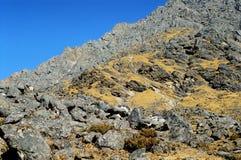 De kant van de berg Stock Fotografie