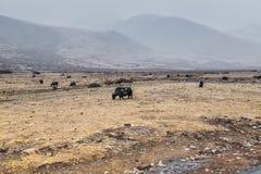 De kant van de sneeuwberg de weg aan yading en Tibetaans dorp Royalty-vrije Stock Foto