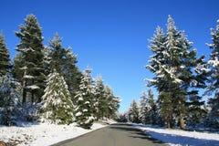 De Kant van de weg van de winter Stock Foto's