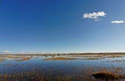 De kant van het moeras Stock Afbeeldingen