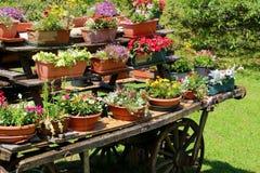 de kar festooned met vele potten van bloemen in meado Royalty-vrije Stock Afbeeldingen