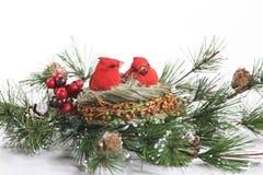 De Kardinalen van de winter in Altijdgroen stock foto's