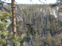 De Karelische lente Stock Afbeelding