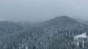De Karpaten die met dicht net hout en een kraai worden behandeld die over in slo-mo vliegen stock footage
