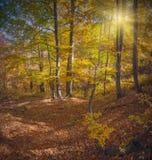 De Karpatische herfst forest_5 Royalty-vrije Stock Foto