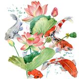 De karper van waterverfkoi en lotusbloembloem van achtergrond waterverfvissen illustratie stock illustratie