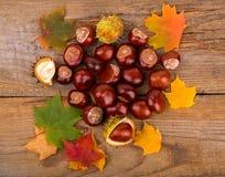 De kastanje van Autumn Background whith en esdoornblad Royalty-vrije Stock Afbeelding
