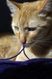 De kat stock afbeelding