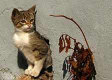 De Kat Stock Afbeeldingen
