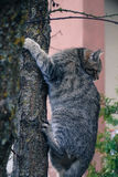 de kat beklom de boom in vrees royalty-vrije stock afbeeldingen