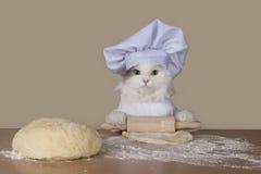 De kat bereidt het deeg voor baksel voor stock afbeeldingen