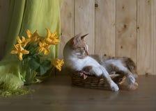 De kat is in de mand royalty-vrije stock afbeelding