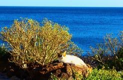 De kat dichtbij de oceaan Royalty-vrije Stock Afbeelding