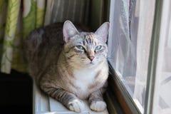 De kat die bij dichtbij het venster leven Stock Fotografie