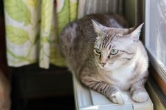 De kat die bij dichtbij het venster leven Royalty-vrije Stock Afbeeldingen
