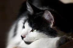 De kat die op de zon wordt verwarmd Stock Foto