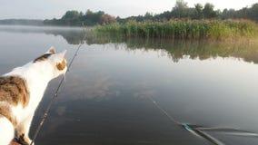 De kat die op de opblaasbare boot op de rivier vissen Een speelse kat in een opblaasbare kajak rust samen met zijn stock video
