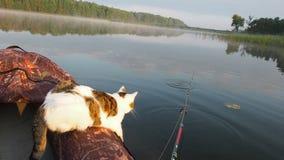 De kat die op de opblaasbare boot op de rivier vissen Een speelse kat in een opblaasbare kajak rust samen met zijn stock videobeelden