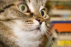 De kat die van de gestreepte kat de camera bekijkt Royalty-vrije Stock Afbeelding